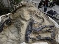 """Court rules """"Dueling Dinos"""" belong to landowners, in a win for science"""