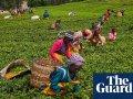 Kenyan tea workers file UN complaint against Unilever over 2007 ethnic violence